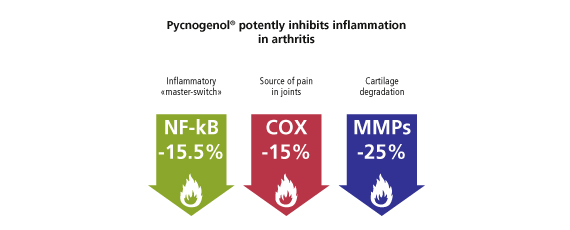 Pycnogenol potently inhibits inflammation in arthritis
