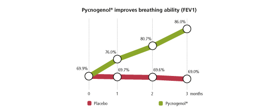 Pycnogenol improves breathing ability (FEV1)