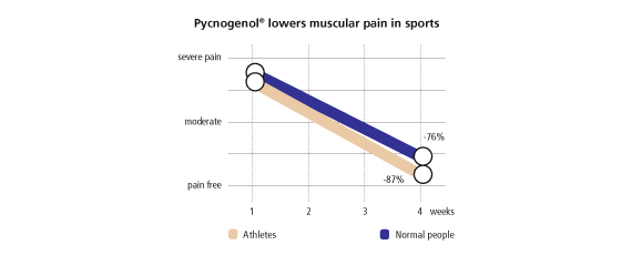Pycnogenol lowers muscular pain in sports